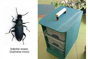 Поедающих пластик жуков обнаружили биотехнологи из Якутии    (Ученые хотят…